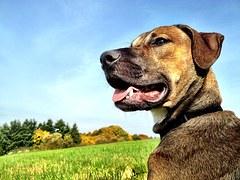 dog-610075__180